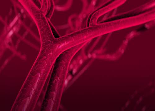 [caption:Vascular & Endovascular Surgery] Click to go to the Vascular and Endovascular Surgery page